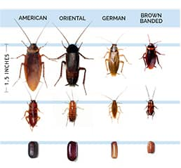 pest-exterminate-control-gilbert-arizona.jpg